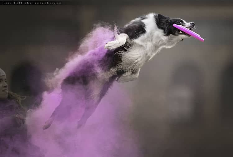 Epic Photos Of Super Dogs Flying Through Colorful Clouds Of