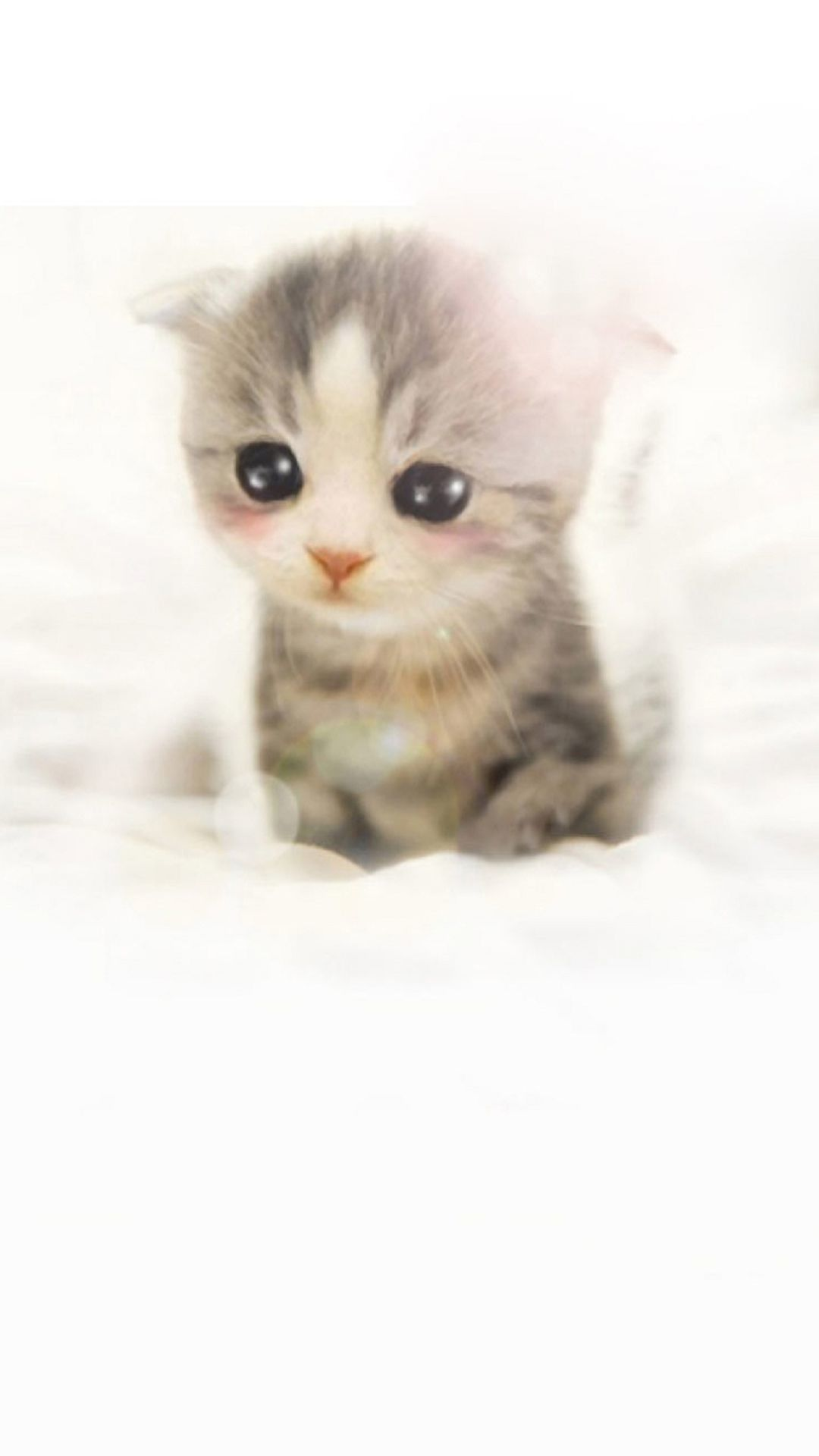 Wallpaper iphone cute cat - 60 Cute Animals Iphone Wallpapers You Would Love To Download