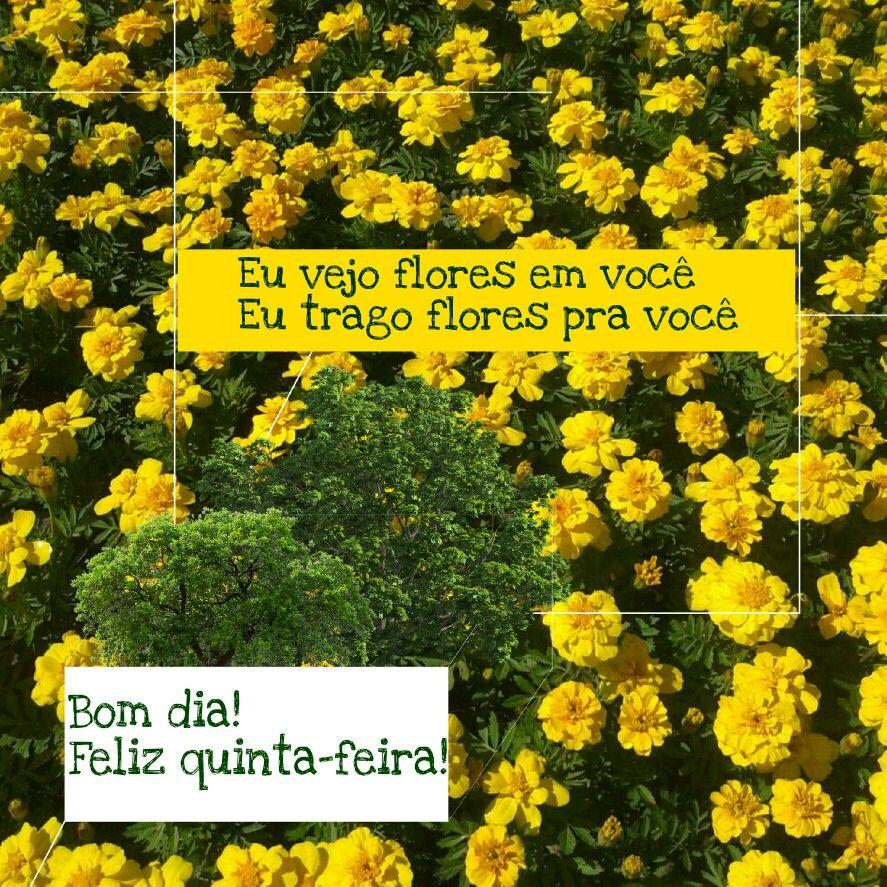 Bom Dia Feliz Quinta Feira Feliz Quinta Feira Feliz Quinta