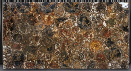Brown Petrified Wood Slab Wood Slab Nature Design Petrified Wood