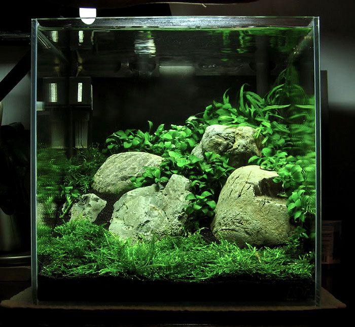 Nano planted shrimp tank for love of animals pinterest plants aquariums and fish - Petit aquarium design ...