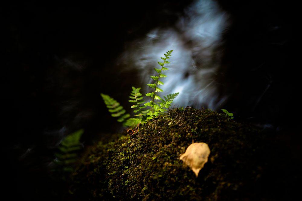 » Reto Semanal 61: Naturaleza