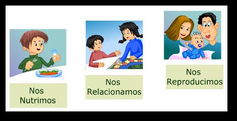 Resultado De Imagen Para Dibujos De Las Funciones Vitales Material Educativo Educacion Primaria Organos De Los Sentidos
