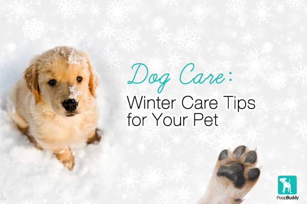 Do you know how to properly protect your #dog's paw pads? Quick #winter pet care tips to keep your pet happy & #healthy!