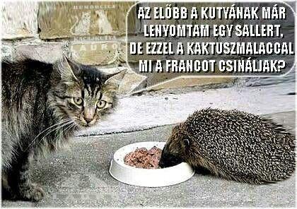 Pin by László Jancsó on Idézetek,poén | Funny cat photos, Cats, Funny  animal pictures