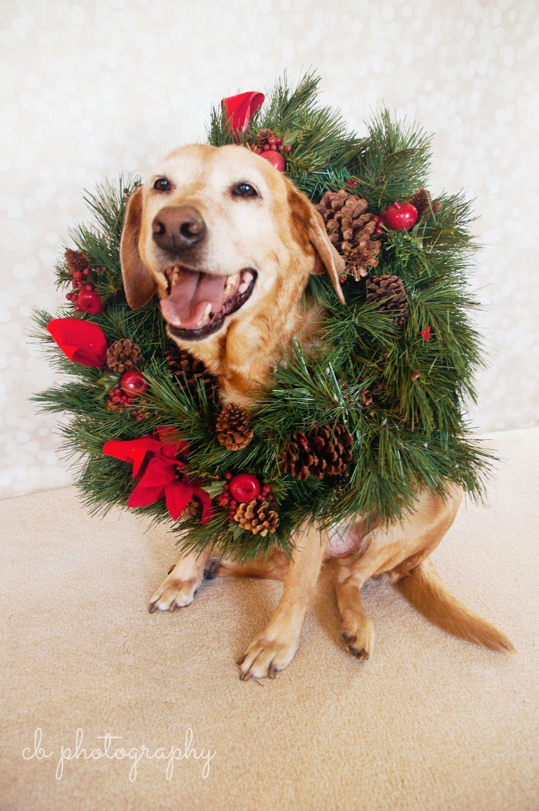 Courtney Photography Holiday Dog! dog cute