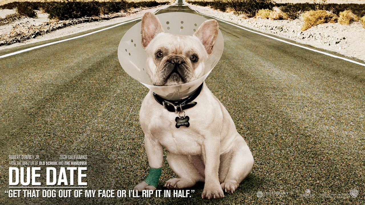 Due Date. | Dogs, Dog movies, Dog wallpaper