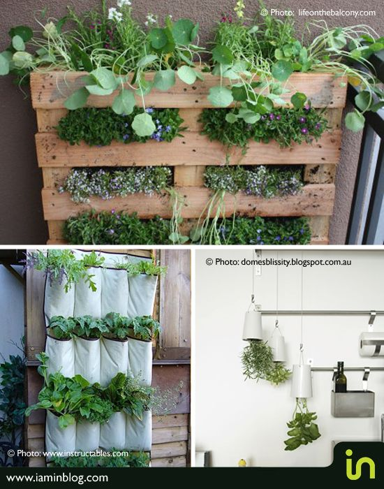 It's very easy to grow your own herbs whether you have a big garden or a  very tiny outdoor space.