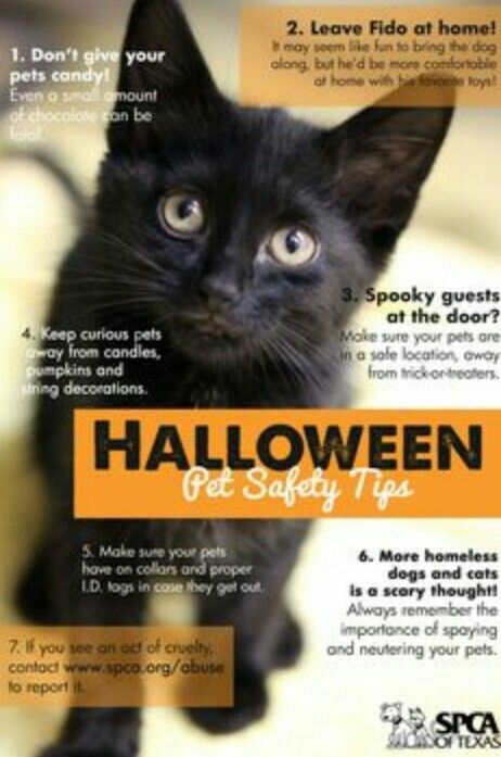 Halloween Safety Tips For Cats - Petcha