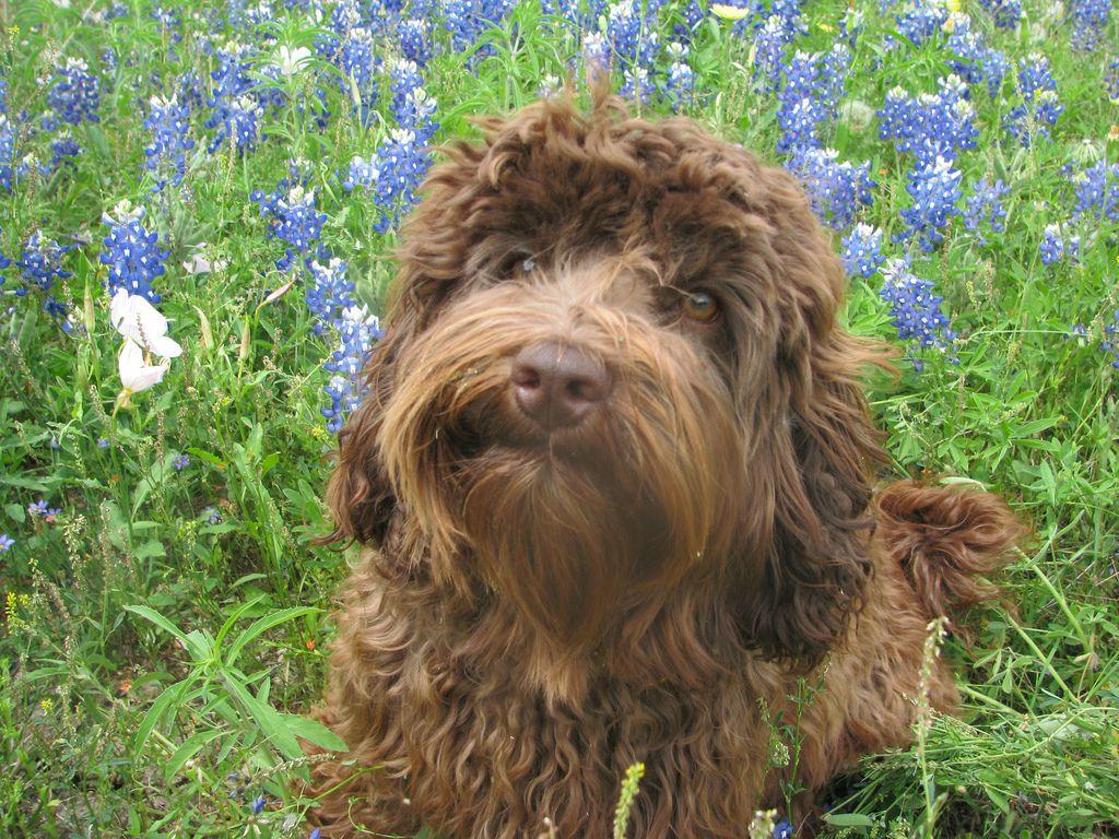Golden Retriever Puppies Az Craigslist References