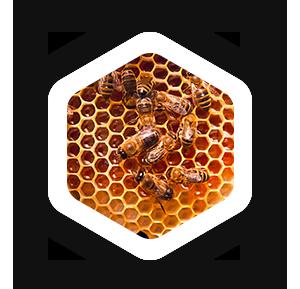 معجون الباشا خلطة العسل التركي والجنسنج وغذاء الملكات وحبات الطلع Muffin Pan Honey Novelty