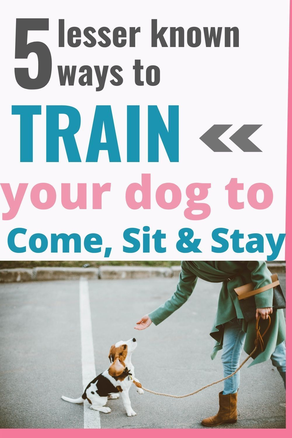 5 Ways To Train Your Dog To Come Sit Stay Training Your Dog