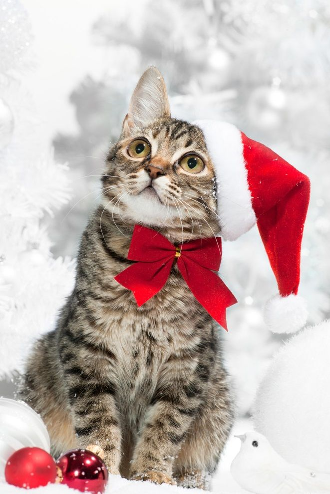 I would surely have a Blue Christmas without my Kitty!!!!