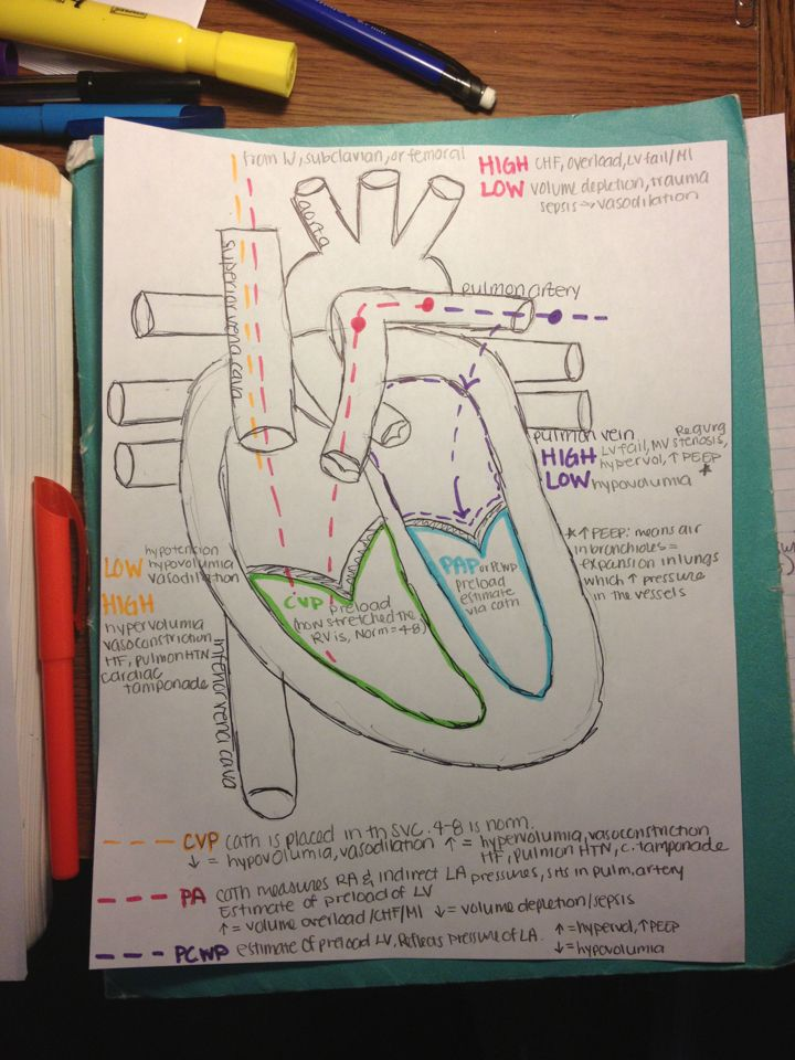 Hemodynamics This Is Absolutely Fabulous Nursing Notes