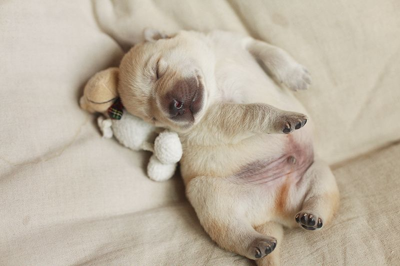 How Precious Is This Sleeping Puppies Puppy Dog Pictures