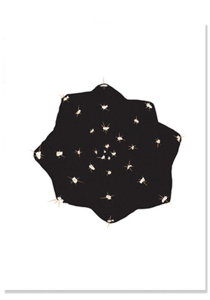 Stjernekaktus