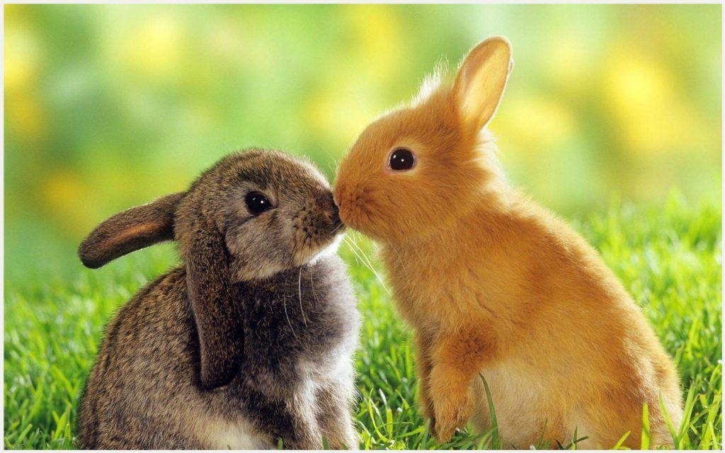 Bunny love wallpaper bunny love wallpaper 1080p bunny love animal sciox Gallery