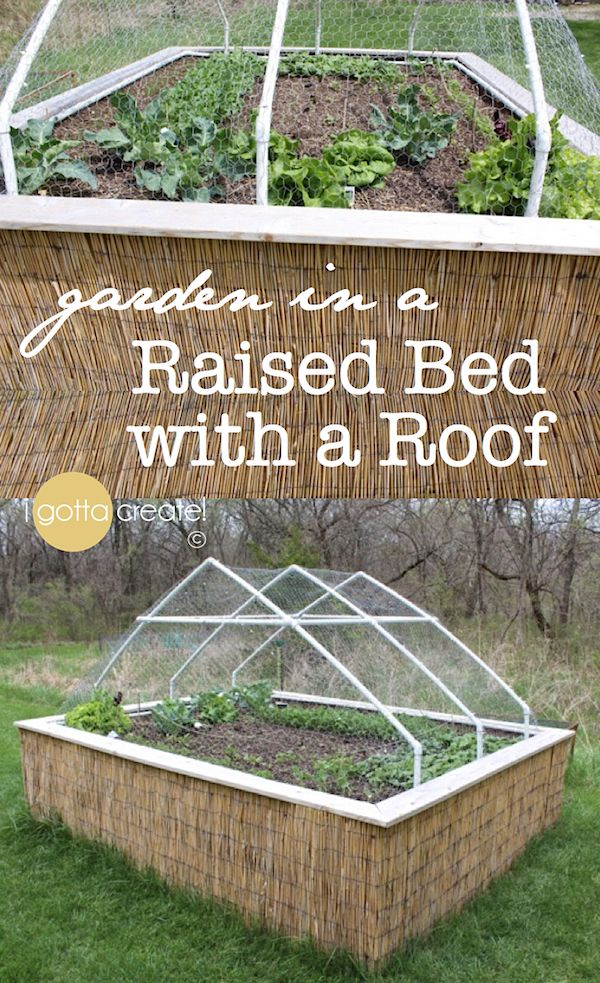 Garden Covers For Vegetables Part - 20: This Raised Vegetable Garden Has A Roof Made Of PVC Pipe And Chicken Wire  To Keep The Deer Out. It Can Also Be Turned Into A Greenhouse Roof!