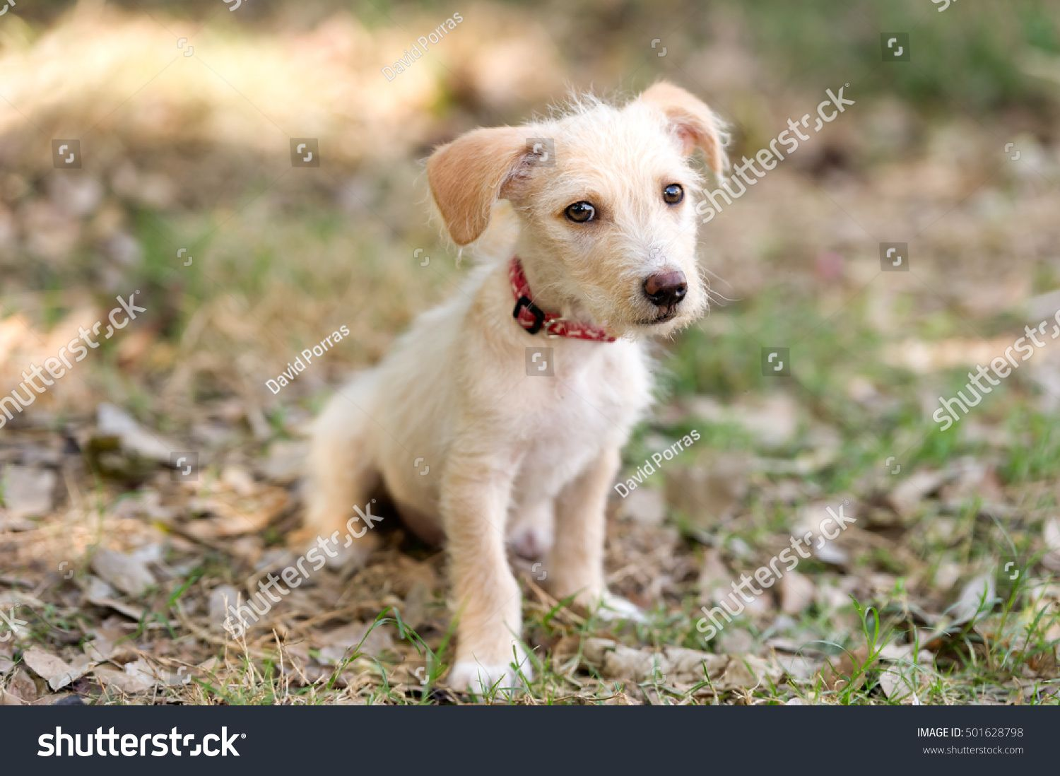 Puppy Dog Cute Adorable Puppy Dog Stock Photo Edit Now Super Dog