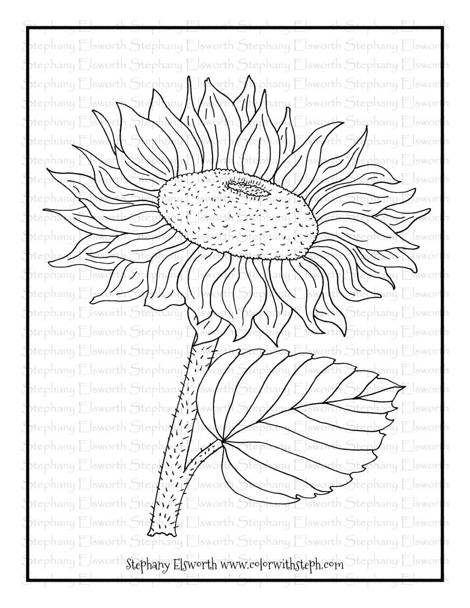 Sunflower Blooms Free Printable Coloring Page Color With Steph Free Printable Coloring Pages Printable Flower Coloring Pages Sunflower Coloring Pages