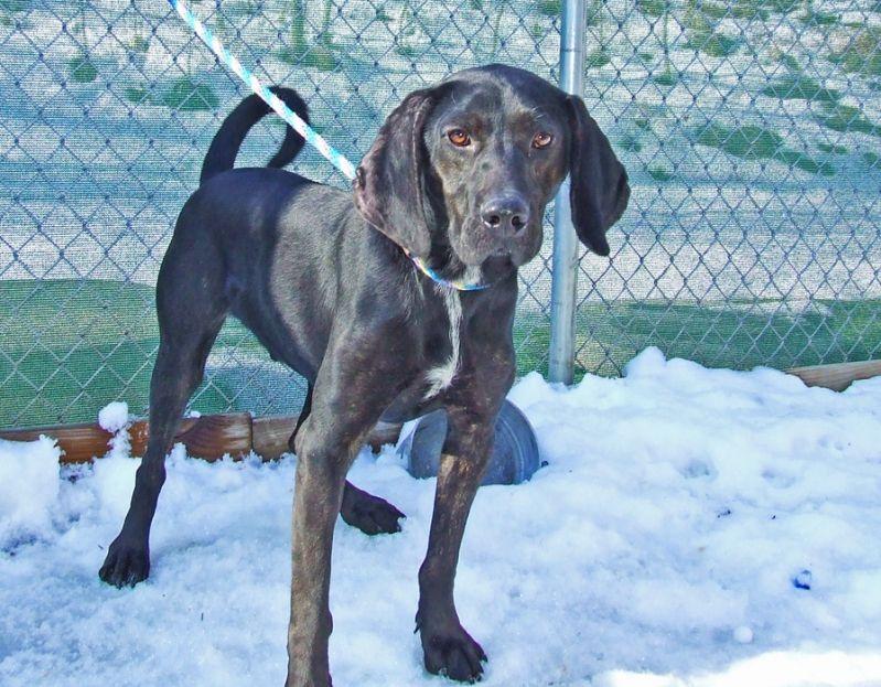 plott hound from google images best guess on my rescue dog..    @Paul Eduard Sullivan #plotthound