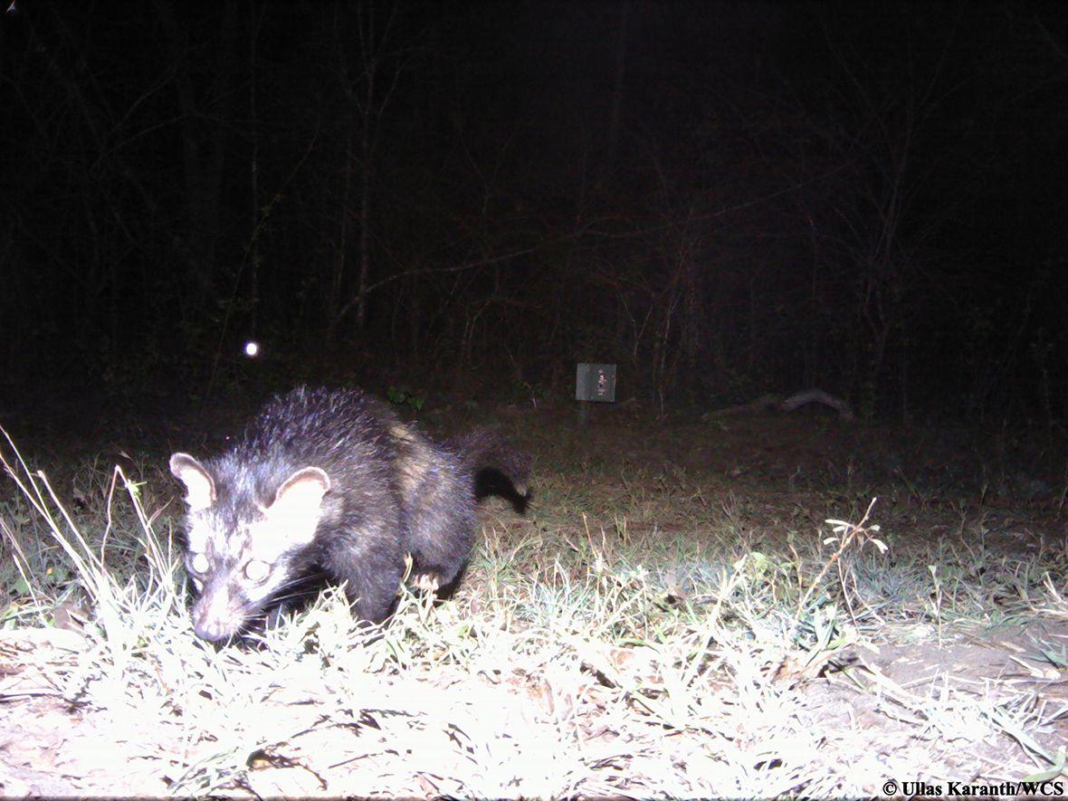 Animal Selfies Wildlife Photographs Taken by Remotely