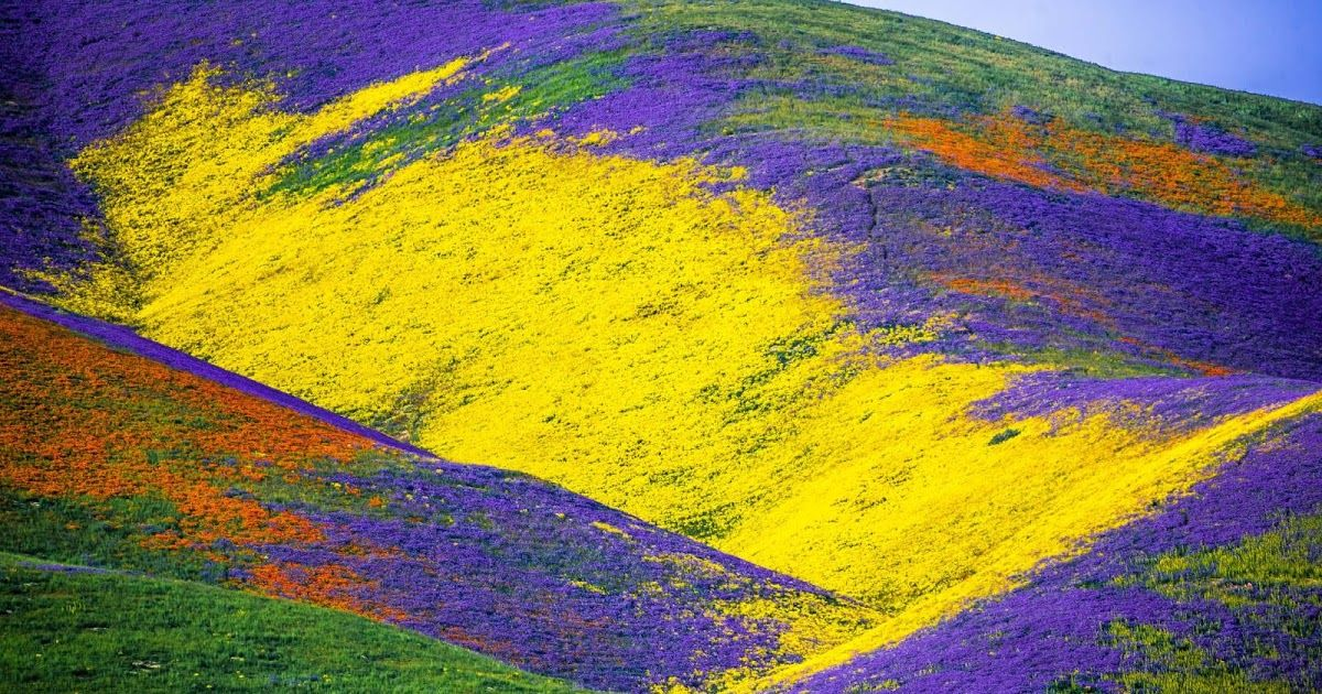 California's Wildflower Super Bloom | Earth Blog | Roam if