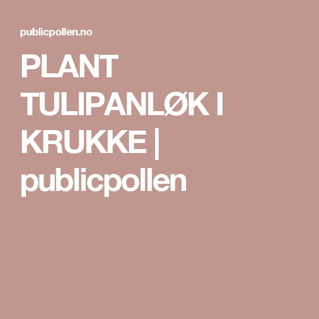PLANT TULIPANLØK I KRUKKE | publicpollen