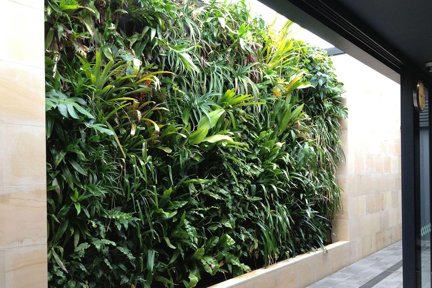 Vertical Garden Ideas Australia skale greenwall » the coolibah hotel | gardens - greenwalls