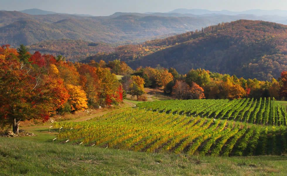 New Vineyard Winery Within A Mile Or So Of My House Burntshirt Vineyards Blue Ridge Mountain Winery Hendersonvil Vineyard Winery Tours Visit Asheville