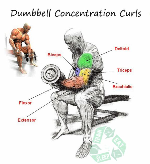 Dumbbell Concentration Curls Biceps Workout Exercises