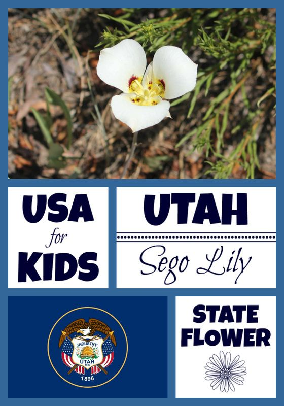 Utah State Flower Usa Facts Flower Coloring Pages Flowers