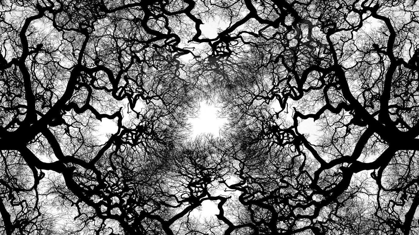 Black And White Tree Pictures Background 1 HD Wallpapers