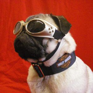 Harley Davidson Pug Harley Davidson Dog Biker Dog Custom Dog