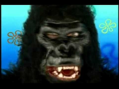 c0496072e6ea3862d6eea0a9372cc1f7 spongebob gorilla attack sandy's attack youtube things to wear