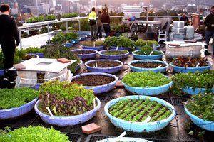 Building a Rooftop munity Garden Kid PoolRooftop
