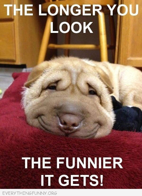 Funny Caption Smiling Dog The Longer You Look The Funnier It Gets
