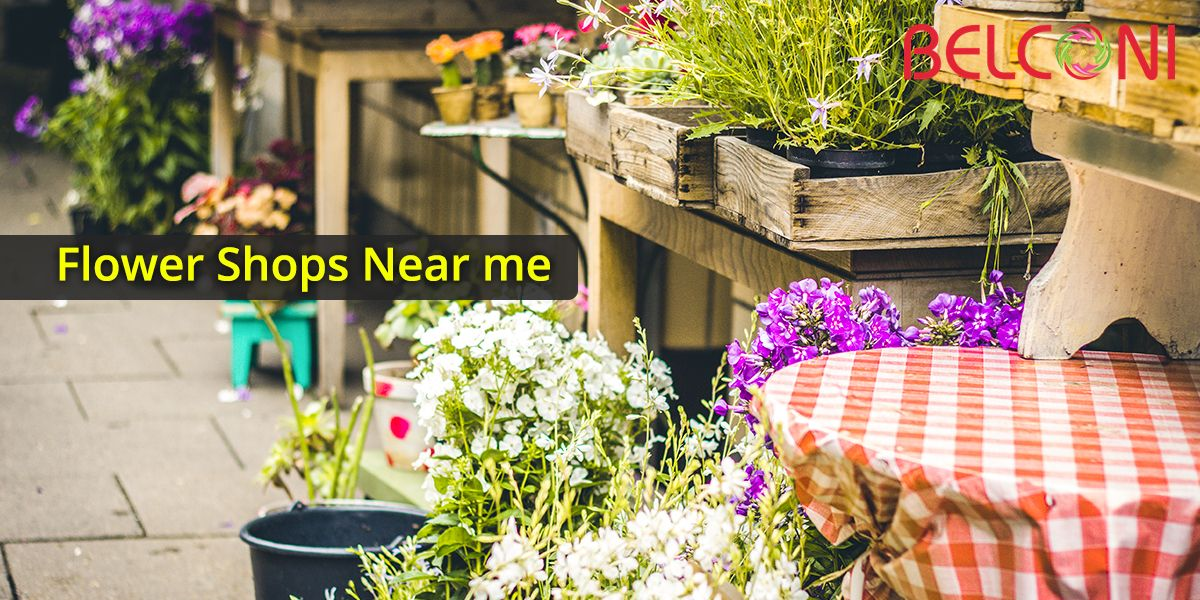 Need Congratulations Flowers Search Flower Shops Near Me Plants Plant Nursery Garden Pictures