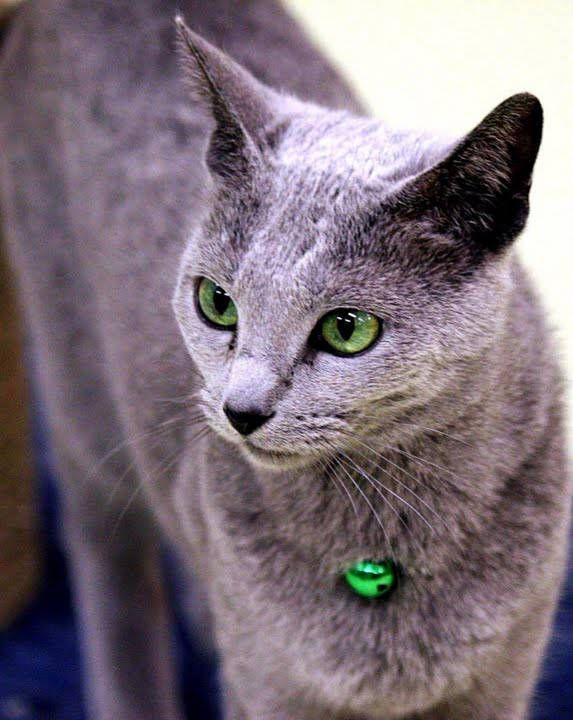 猫のきれいな画像を貼るよー : ハムスター速報