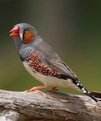 Resultado de imagen de aves exoticas