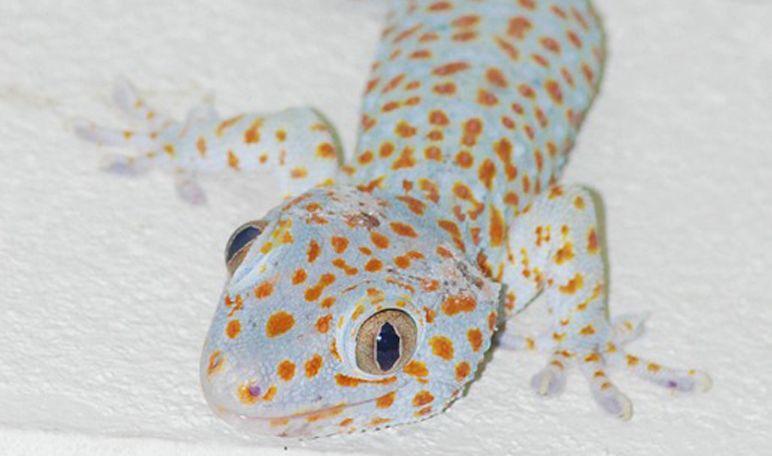 Alejar A Las Lagartijas Con Naftalina Trucos De Hogar Lagartijas Reptiles Lagartos