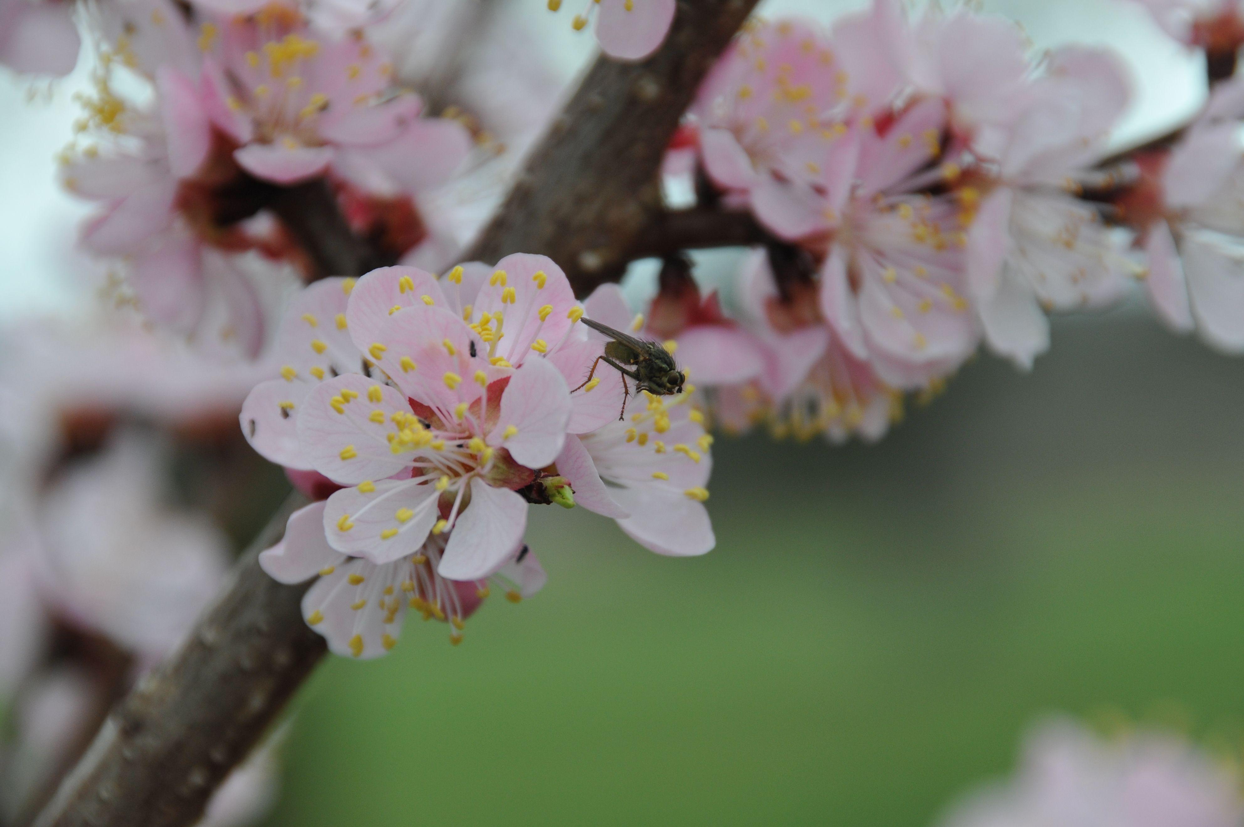 Spring in Bucks County, Pa