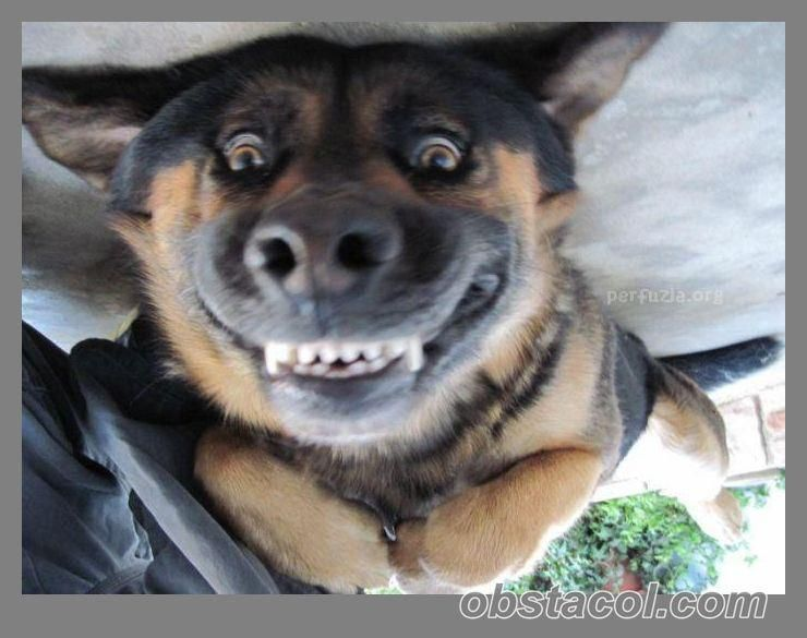 Upside Down Smiling Dog Funny Dog Pictures Happy Dogs Funny Dogs