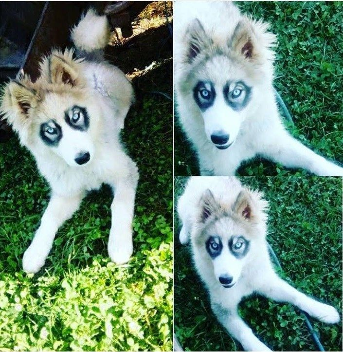 28 Doggos With Beautiful And Unique Markings That