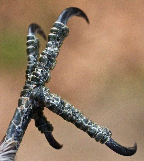 Image result for zygodactyl bird feet