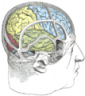 Brain Teasers and Games for the Brain: Test your Brain