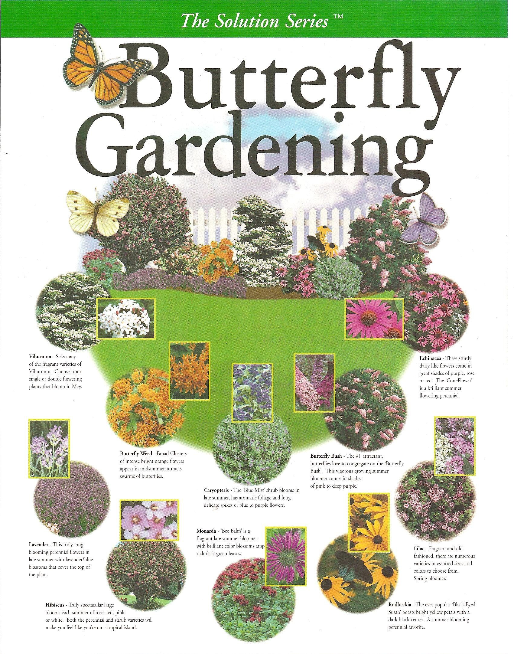 Butterfly Gardening Plan Create Your Own Garden With This Key Map