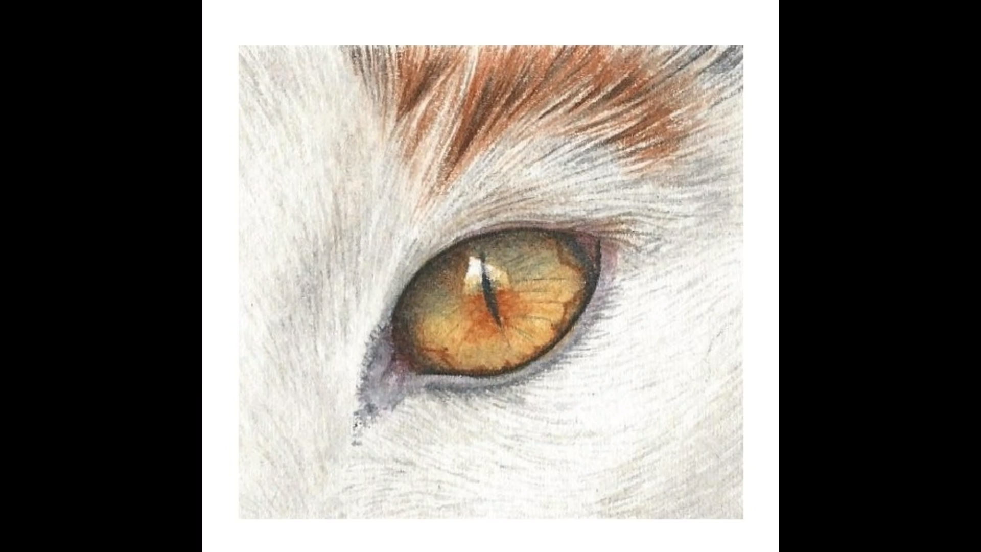 How to Paint a Realistic Cat Eye in Watercolor#cat #eye # ...