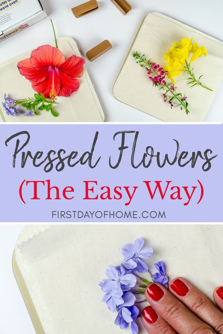How to Make DIY Pressed Flower Art  The Easy Way is part of Pressed flowers diy - Learn how to press flowers and make dried flower art using the Microfleur Microwave Flower Press  This easy tutorial will give you dried flowers in minutes!