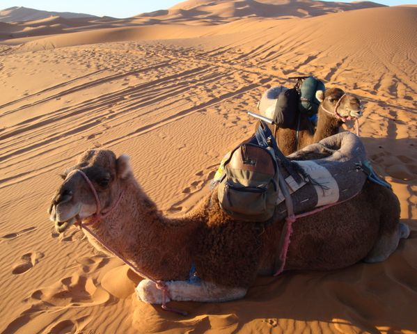 2010-12-13-CamelsinSahara.jpg